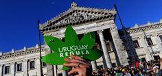 El gramo de marihuana legal costará $1,30 dólares en Uruguay El precio es ligeramente superior al anunciado anteriormente y fue confirmado por el Instituto de Regulación y Control del Cannabis. Los usuarios tendrán derecho a adquirir hasta 40 gra...