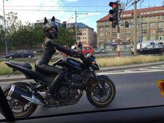 Catwoman on Tour | Webfail - Fail Bilder und Fail Videos