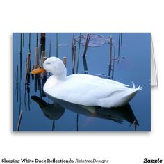 Create your own unique greeting on a Duck card from Zazzle. From birthday, thank you, or funny cards, discover endless possibilities for the perfect card! White Ducks, Reflection, Greeting Cards, Sleep, Birds, Animals, Garden, Nature, Animales