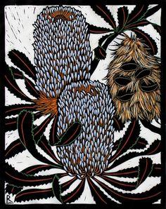 Banksia Serrata 28 x 22 cm Edition of 50 Hand coloured linocut on handmade Japanese paper Australian Wildflowers, Australian Native Flowers, Australian Artists, Australian Plants, Botanical Art, Botanical Illustration, Linocut Prints, Art Prints, Woodcut Art