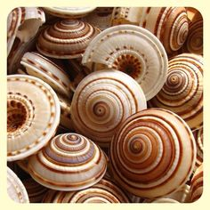 Beautiful Sea shells
