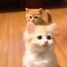 Ideas Funny Cute Cats Kittens Smile For 2019 Cute Baby Cats, Funny Cute Cats, Cute Little Animals, Cute Cats And Kittens, Cute Funny Animals, I Love Cats, Crazy Cats, Kittens Cutest, Fluffy Kittens