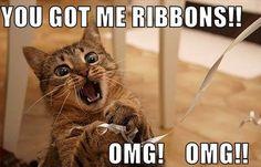 One happy cat!