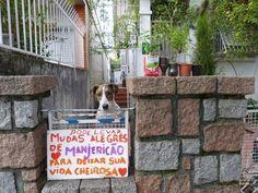 A mulher que distribui mudas de manjericão para quem passa na rua. | 24 brasileiros que provam que ainda é possível confiar nas pessoas