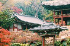 30 Photos That Prove the South Korea Autumn Just Won at Life Learn To Speak Korean, Autumn In Korea, Yellow Tree, South Korea Travel, Jeju Island, Hidden Beach, Photo Essay, Fall Photos, American Idol