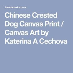 Chinese Crested Dog Canvas Print / Canvas Art by Katerina A Cechova