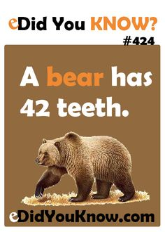 A bear has 42 teeth. http://edidyouknow.com/did-you-know-424/