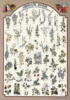 Magical herbalism scott cunningham