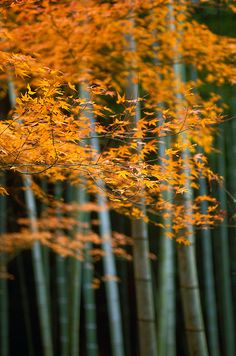 Kyoto, Japan photo by tin-so on flickr