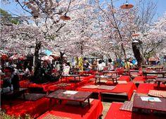 Nikmati Sakura Festival di Kyoto-Osaka, Jepang Selama 6 hari 4 malam hanya Rp 5.555.000 saja