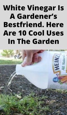 Garden Ideas To Make, Diy Garden Projects, Easy Garden, Lawn And Garden, Garden Bugs, Garden Weeds, Herb Garden, Growing Vegetables In Pots, Container Gardening Vegetables