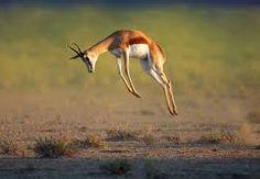 namaqua game lodge springbok south africa - Google Search