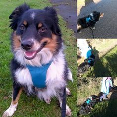 Shep look utterly fantastic in his new Ruffwear Front Range dog harness available at Barks & Bunnies. We think the colour is perfect for him, have super happy walks Shep. #barksandbunnies #frontrange #ruffwear #dogs #lovethemhappy