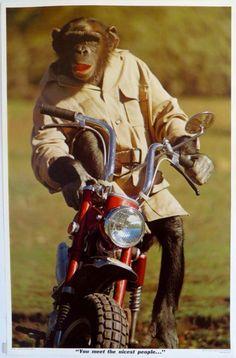 Honda Dax & Monkey