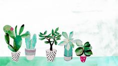 For someone with a windowsill covered with succulents. | 27 Desktop Backgrounds That Will Make You Happy Whenever You See Them