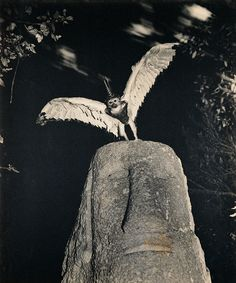 JOAN FONTCUBERTA http://www.widewalls.ch/artist/joan-fontcuberta/ #conceptual #art #photography