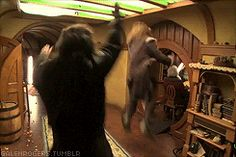 """(GIF) """"Fili and Kili ~ So this is what's going on behind the scenes!""""  Haha, this is awesome :)"""