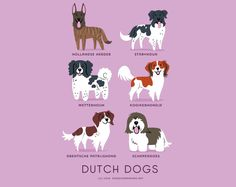 Pastor holandês, Cão de aponte frisão, Cão d'água frisão, Pequeno cão holandês, Spaniel perdigueiro de Drente e Schapendoes são raças HOLANDESAS