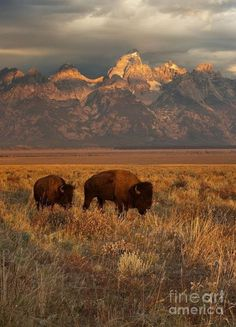 Grand Teton National Park Wyoming.... #Relax more with healing sounds