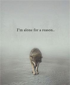 Quotes 'nd Notes - Im alone for a reason. The reason… - Im Alone Quotes, Loner Quotes, Wisdom Quotes, True Quotes, Better Alone Quotes, Forever Alone Quotes, Wise Women Quotes, Lone Wolf Quotes, Wolf Qoutes