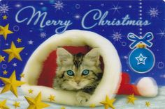 Merry Christmas Cat Lovers. For more Christmas Cats, visit https://www.facebook.com/funholidaycats