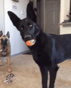 – When they tell you they're getting a cat (GIF)  |  The Shirk Report – Twisted Sifter on Twitter