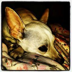 My dog ♥
