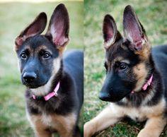 Got some rabbit ears goin on! kmartina