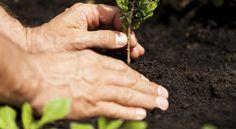 Cinquecento nuovi alberi sul territorio di Assisi, uno per ogni nuovo nato Un'opera di forestazione urbana senza precedenti per la città