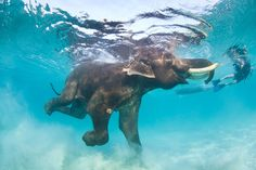 maybe i should just have a board of elephants in water