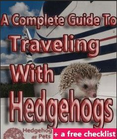 Traveling with your hedgehog? Here's all you need to know when taking your hedgehog on a trip | Hedgehogaspets.com