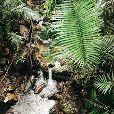 Daintree Rainforest, NORTH QUEENSLAND // @lifemoreblessed