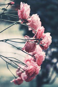 Flower power ! Délicatesse et naturalité pour ces belles roses prête à éclore. Ca sent le printemps...