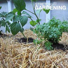Make a Straw Bale Planter