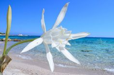 Spiaggia di Vignola Mare Sardegna  -  Mirice