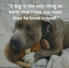 Uplifting So You Want A American Pit Bull Terrier Ideas. Fabulous So You Want A American Pit Bull Terrier Ideas. Pitbull Terrier, Dog Pitbull, Amstaff Terrier, Pitbull Pics, Rottweiler Puppies, Animals And Pets, Baby Animals, Funny Animals, Cute Animals