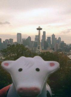 Seattle Cow
