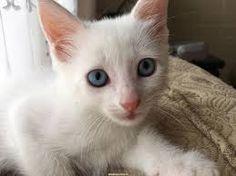 Resultado de imagen para gatitos bebes adorables