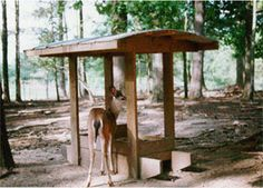 Auburn University Deer Feeder Design