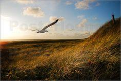 HC-Photography - Über den goldenen Dünen