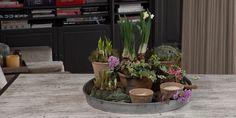 Een bloeiend werkje, dat is wat Romeo deze week creëert. Na een wandeling door het tuincentrum en een zoektocht door zijn schuur zet hij alles wat je nodig hebt voor een fleurig voorjaarsstuk op een rij. Verwelkom het voorjaar Eindelijk begint de zon een beetje door te breken. Het voorjaar is er weer! En Romeo…