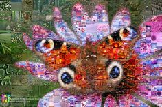 The wild colors of the plant and insect life in this photo collage The Butterfly