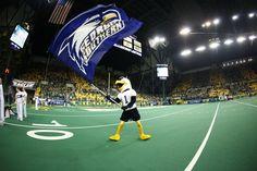 Gooooo Eagles! #GSU Georgia Southern Eagles. GUS, the eagle mascot