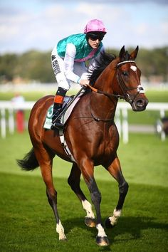 14 races, 14 wins. One of the all time greats - Frankel.