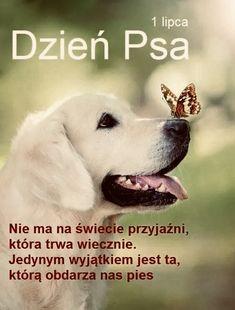 Dog Quotes, Labrador Retriever, Haha, Dogs, Fun, Animals, Animal Pictures, Labrador Retrievers, Animales