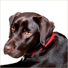 Výsledok vyhľadávania obrázkov pre dopyt male plemena psov