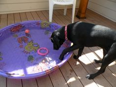 I may be a water dog... but I don't have to like the stuff!