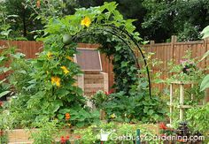 Squash Arch In The Garden - DIY tutorial.  I would use a non-toxic paint though for the PVC if I painted it since it is in my vegetable garden.