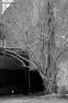 A  leafless tree growing up through the concrete in the middle of a city. Copyright David Stuart