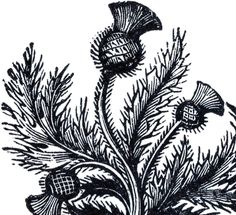 Public Domain Thistle Image scanned from a rare Antique Printer's book that dates to around Circa 1880′s.